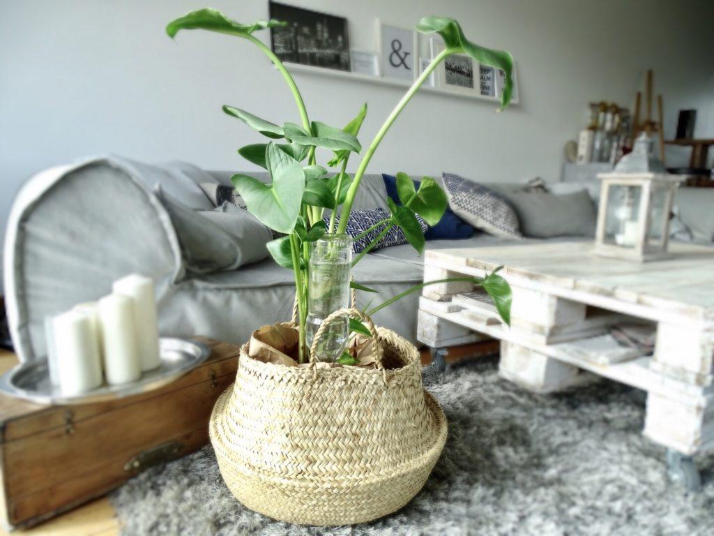 de belles plantes sans s'en occuper